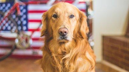 Кумедний собака розвеселив Reddit - фото 1