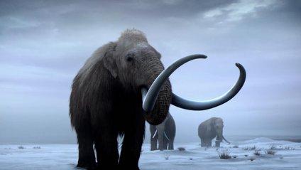 """Вчені планують """"воскресити"""" мамонтів - фото 1"""