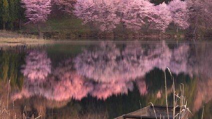 Японія у різні пори року - фото 1