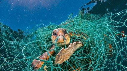 Щоби привернути увагу на екологію - фото 1