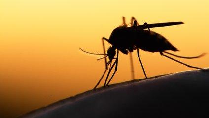 Додайте до свого плейлиста ці пісні, щоби позбутися комарів - фото 1