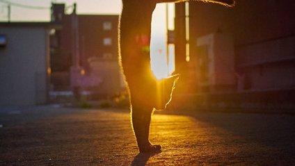 Коти, які танцюють - фото 1
