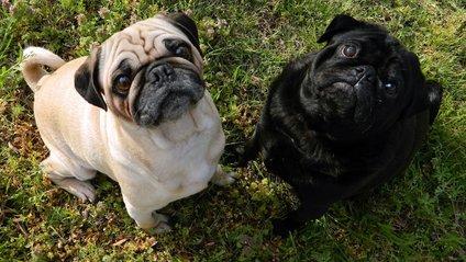 Собаки, які напакостили - фото 1