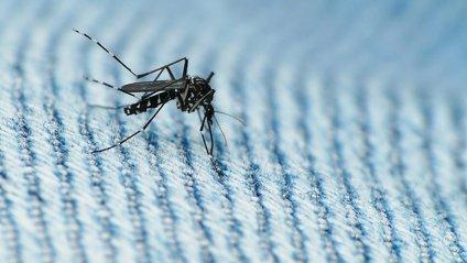 Комарів притягує низка факторів - фото 1