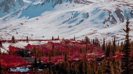 Яскраві подорожі Аляскою - фото 1