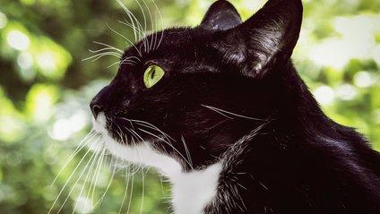Кіт вчив моделей Dior ходити подіумом - фото 1