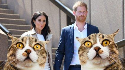 Герцогиня Сассекська багато розповідала друзям про свогоулюбленого кота - фото 1