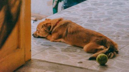 Вірний собака підкорив мережу - фото 1