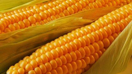 Кукурудзу рекомендуютьвживати увідварному вигляді - фото 1