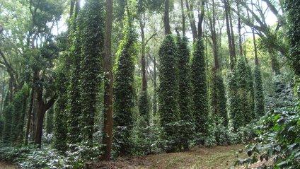 Ураган повернув доісторичний ліс - фото 1