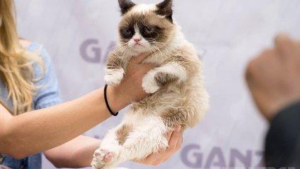 З'явився новий сердитий котик - фото 1