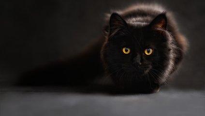 Чорний кіт розвеселив Reddit - фото 1