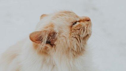 Кіт, який змирився з долею - фото 1