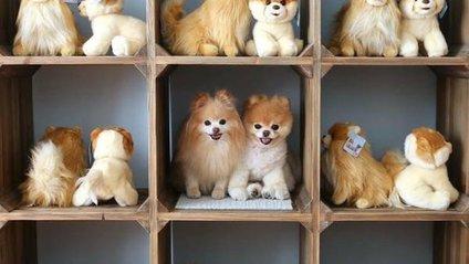 Домашні тваринки, які вас ровзеселять - фото 1