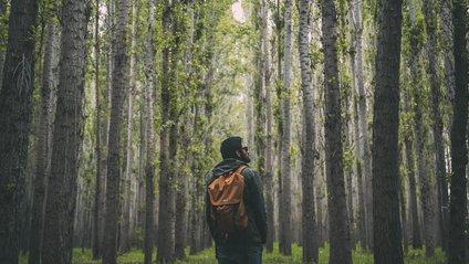 Що робити, якщо заблудився в лісі - фото 1
