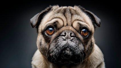 Ось чому собаки так мружать брівки - фото 1