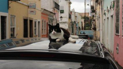 Кіт обожнює машини - фото 1