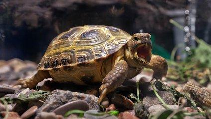 Черепаха зняла вражаюче відео - фото 1