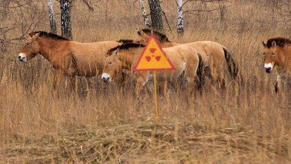 Природа Чорнобиля - фото 1