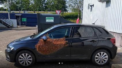 Бджоли окупували авто голландця - фото 1