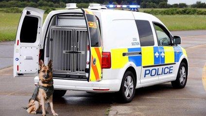 Фургон обладнаний для комфортного транспортування собак - фото 1