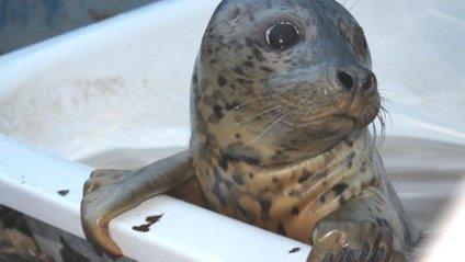 Тюленів навчили повторювати популярні мелодії - фото 1