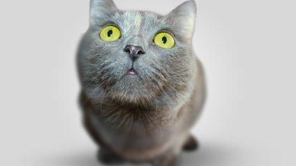 Рівень довіри кішки вразив мережу - фото 1