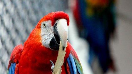 Папуга став зіркою мережі - фото 1