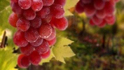 Виноград римський рубін - фото 1