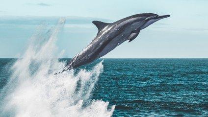 Зграя дельфінів оточила катер - фото 1
