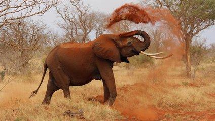 Розлючений слон налякав туристів - фото 1
