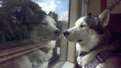 Пес відправився на пошуки своєї коханої - фото 1