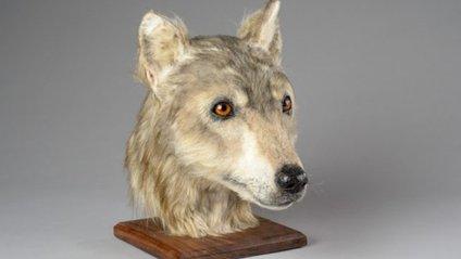 Як виглядав собака 4000 років тому - фото 1