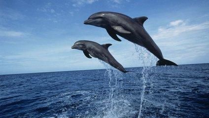 Дельфіни підпливли до узбережжя Одеси - фото 1
