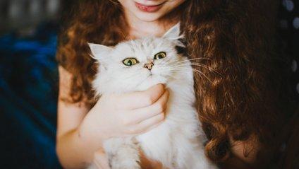 Білосніжний кіт здивував мережу своїми лапками - фото 1