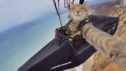 Кіт Менні робить ідеальні селфі - фото 1