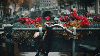 У Нідерландах відкрили найбільший велопаркінг світу - фото 1
