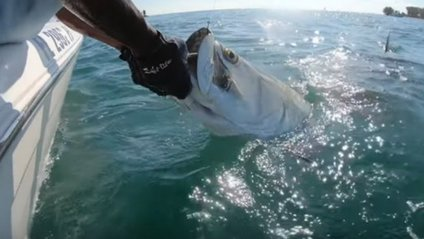Сутичка акули і рибалки - фото 1