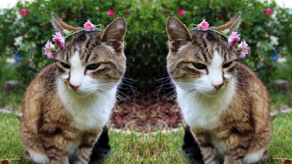 Клонування кота – процедура не з дешевих - фото 1