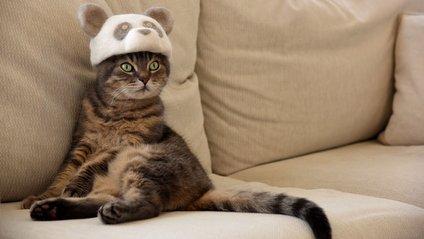 Кумедні коти у смішних капелюхах - фото 1