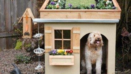Геніальні будки собак - фото 1