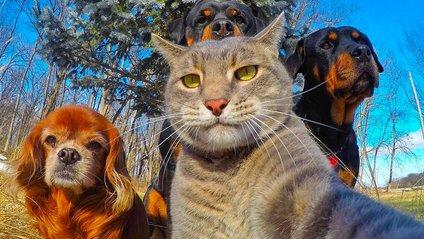 Тепер ви зможете робити круті селфі зі своїм котом - фото 1