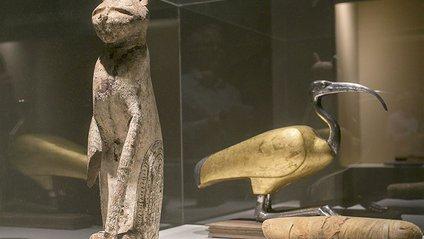Археологи розкопали рідкісну колекцію мумій кішок - фото 1