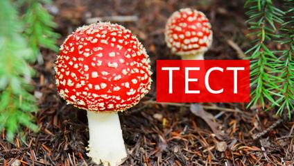 як визначити отруйний гриб - фото 1