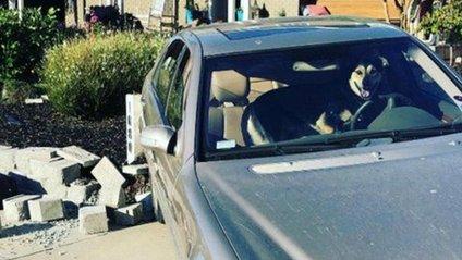 Собака викрав авто - фото 1