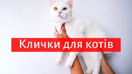 як назвати кота - фото 1