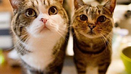 У які щілини можуть пролізти коти - фото 1