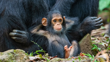 Мавпа на розслабоні - фото 1