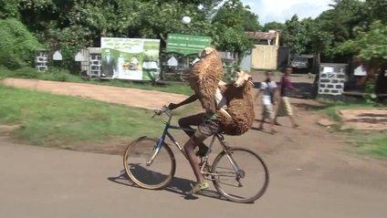 Велосипедист з вівцями - фото 1