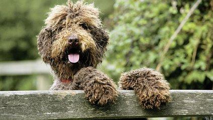 Собака-пранкер - фото 1